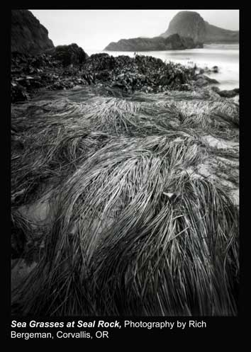 Bergeman,-Rich_Sea-Grasses-at-Seal-Rock_Corvallis,-OR.