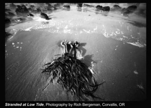 Bergman,-Rich_Stranded-at-Low-Tide_Corvallis,-OR.