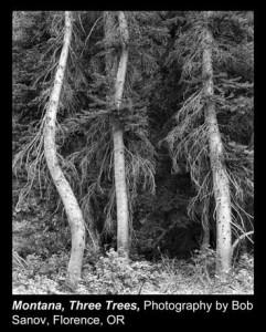 Sanov,-Bob_Montana,-Three-Trees_Florence,-OR.