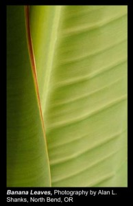 Shanks,-Alan-L._Banana-Leaves_North-Bend,-OR.
